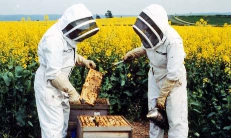 equipement-apiculture