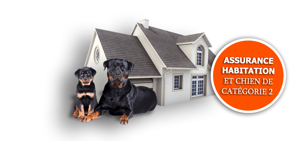 assurance-chien-rootweiller-2-eme-categorie-responsabilite-civile