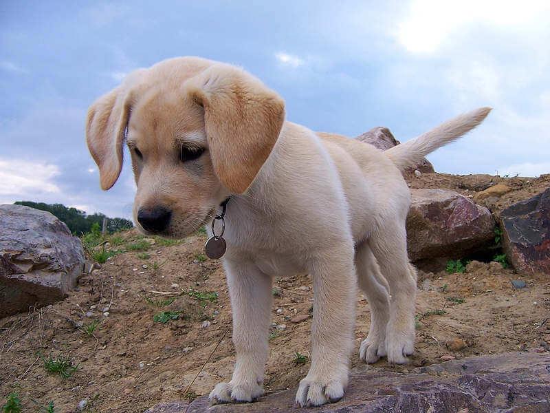 un-chien
