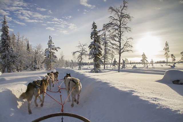 Faire du traineau à chien en Finlande