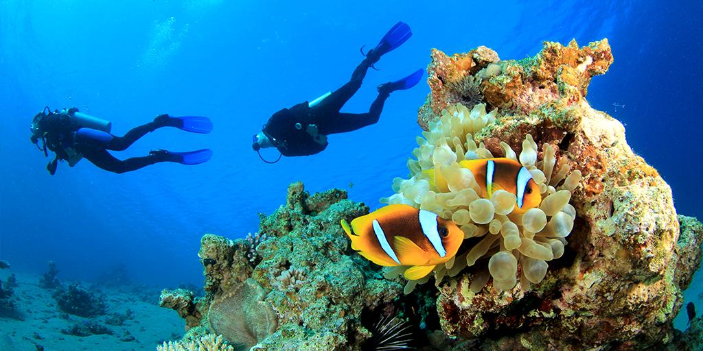 13. Où faire de la plongée sous-marine au Maroc - Voici les meilleurs spots